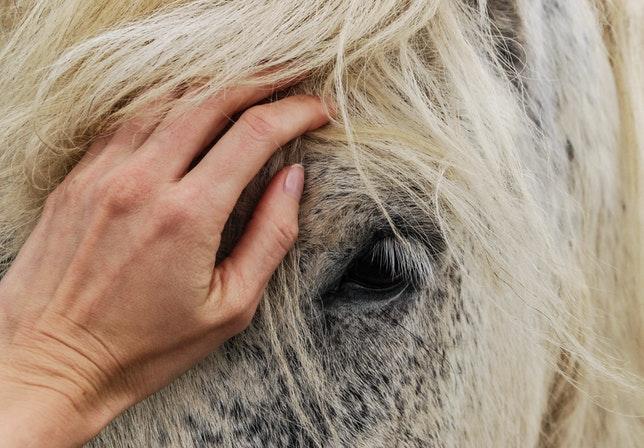 jak dbać o konia